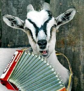 коза с баяном